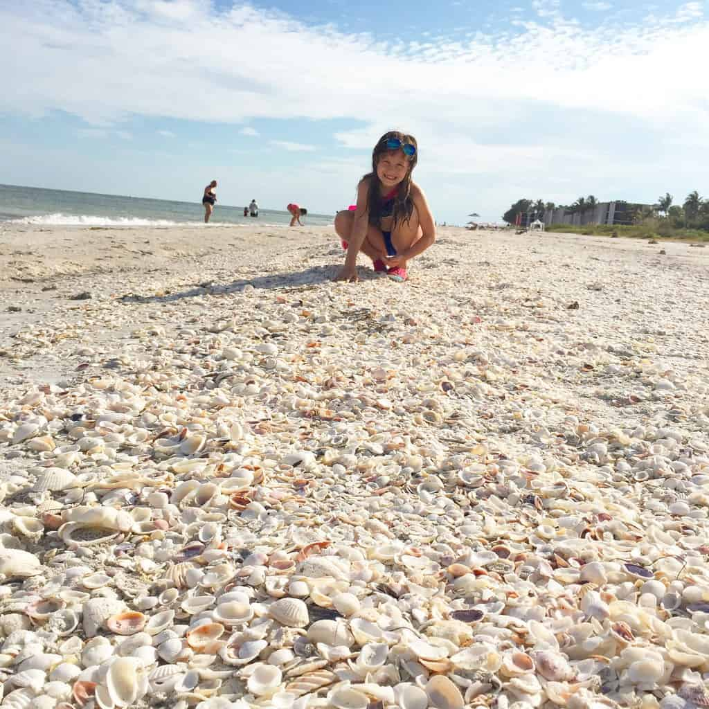 A small girl is picking shells out of a beach of only shells next to the ocean.