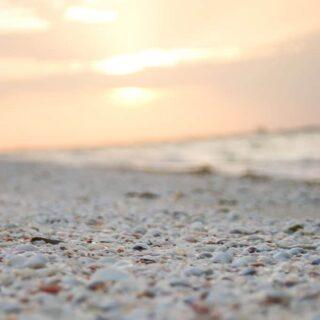 shells on Sanibel Island beach