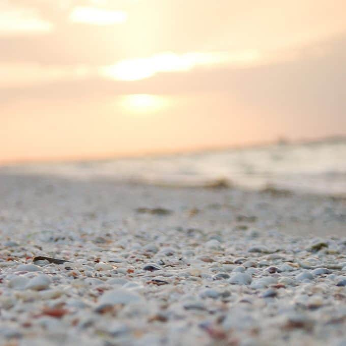 shells on Sanibel Island beach