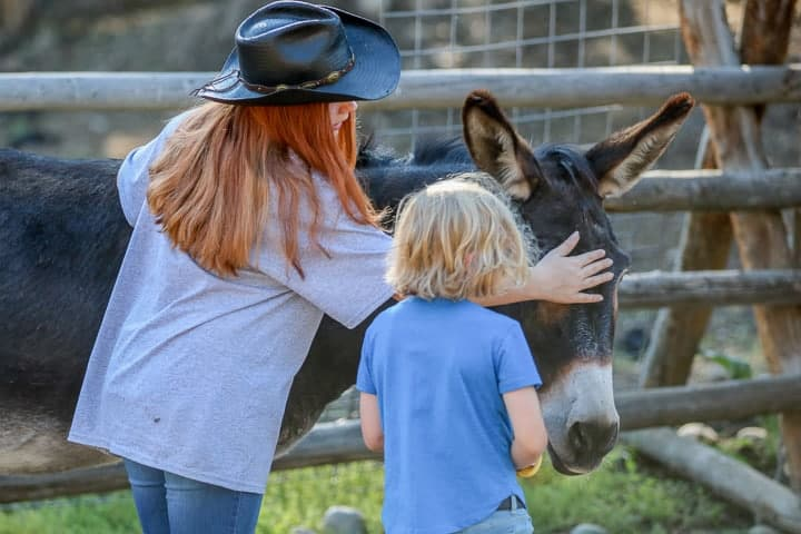 A girl with red hair standing next to a young child both petting an animal outside a wooden fence on a Colorado ranch.
