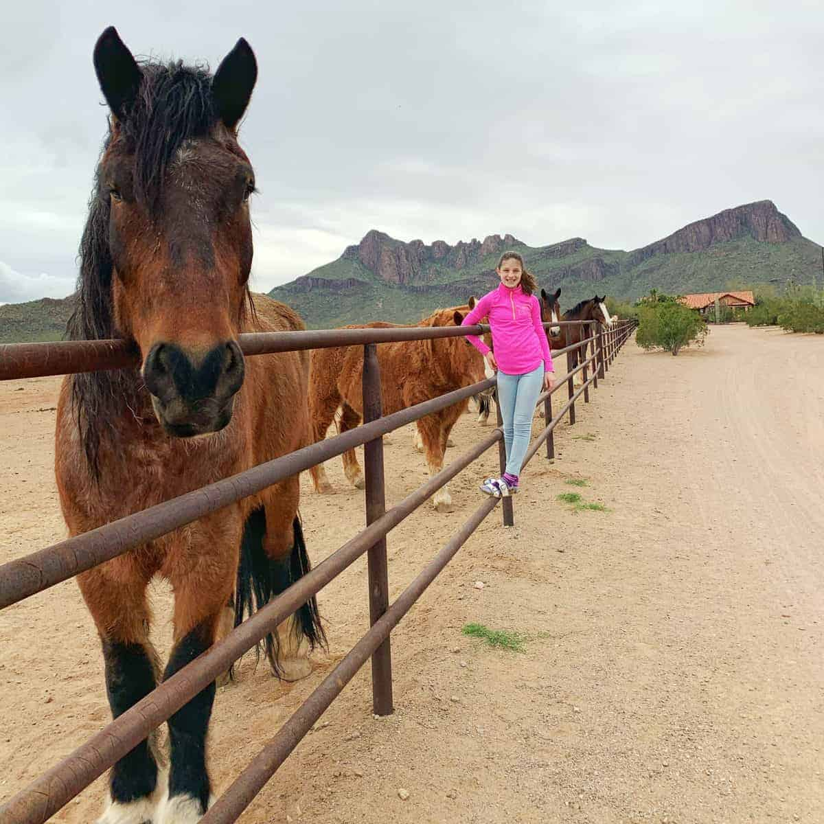 White Stallion Ranch, the Best All-Inclusive Resort in Arizona showing a young girl staying on a gate next to horses on a dude ranch.