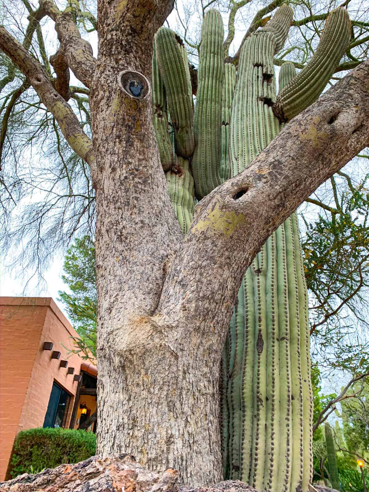 White Stallion Ranch, the Best All-Inclusive Resort in Arizona showing the scenery located around the ranch, which included cacti and trees.