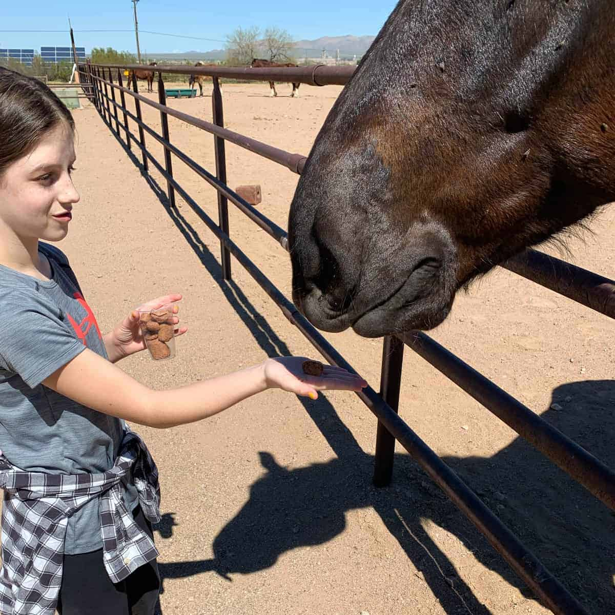 White Stallion Ranch, the Best All-Inclusive Resort in Arizona showing a young girl feeding a treat to a brown horse.