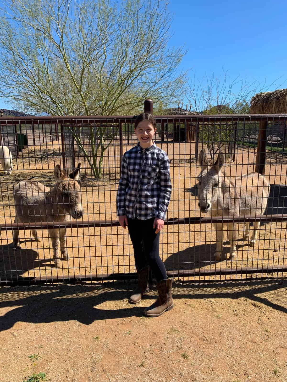 White Stallion Ranch, the Best All-Inclusive Resort in Arizona showing a young girl standing by the petting zoo gate.