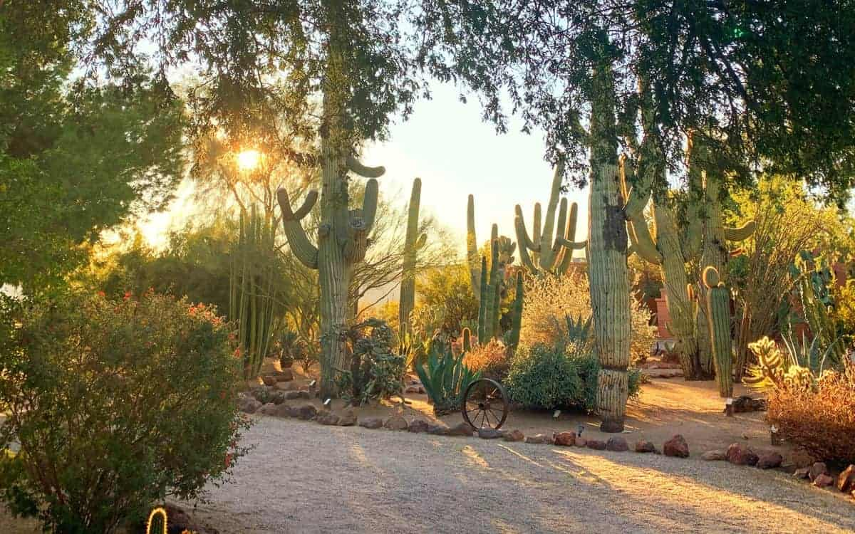 White Stallion Ranch, the Best All-Inclusive Resort in Arizona, showing the local scenery with the sun rising.