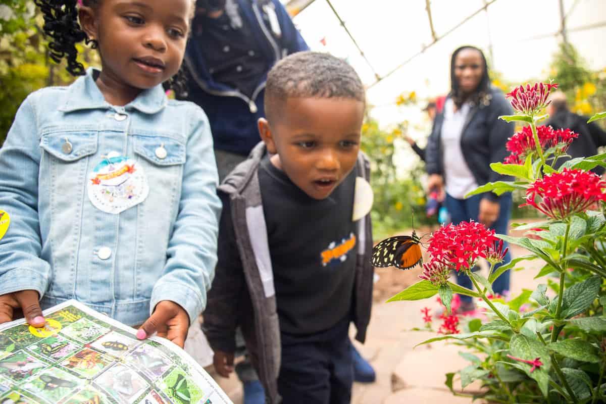 kids looking at butterflies