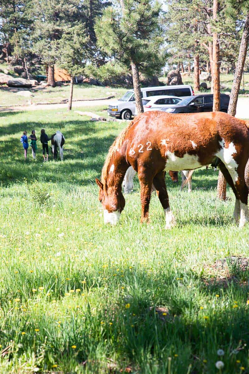 horse eating grass in a pasture